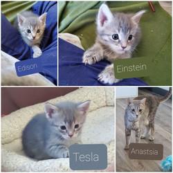 smart kittens 2