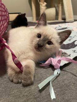 Lizzie cat 1