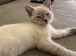 Theodore cat 1
