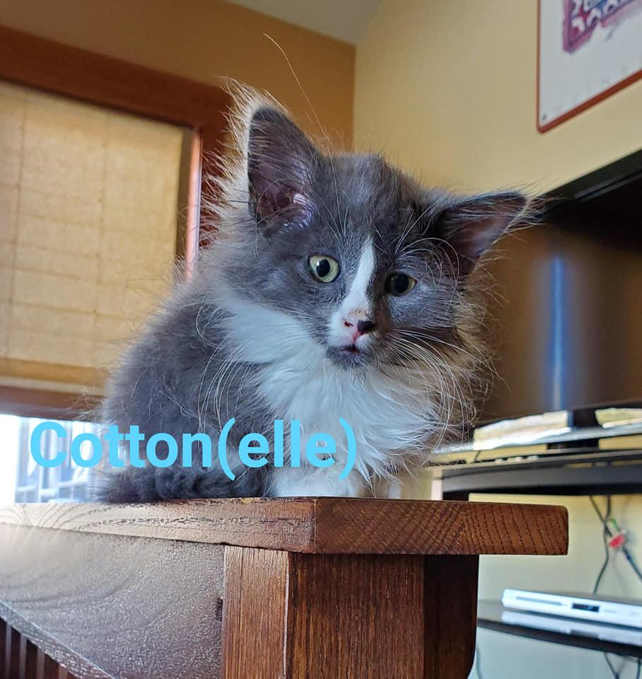 Cottonelle4