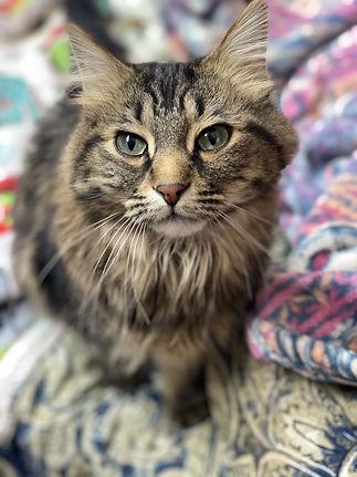 Rex cat 1.jpg