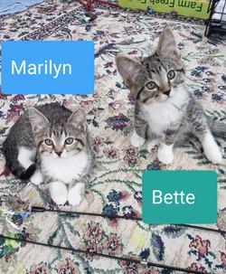 Marilyn Bette