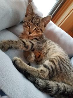Gizmo cat2 2