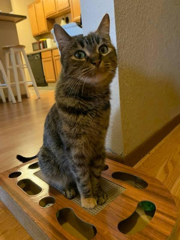 Dakota cat 2