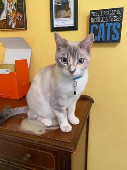 Khloe cat 4