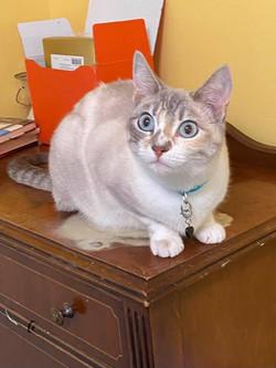 Khloe cat 1