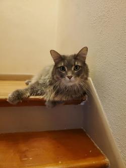 Oliver cat 1