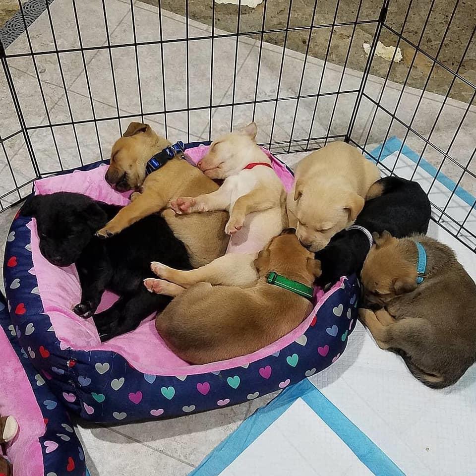 7 pups