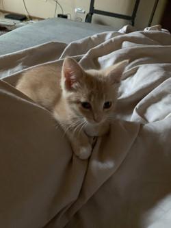 Mort cat 2