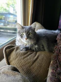 Oliver cat 3