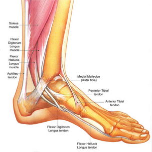Sprains, Strains, and Ankle Pains
