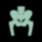 noun_pelvis skeleton_2166887.png