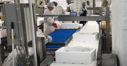 Fischverarbeitung in Fischfabrik