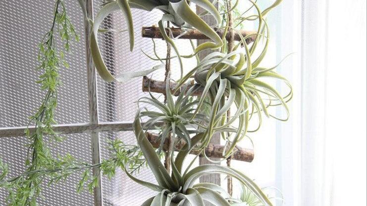Artificial Air Plant/Tillandsia Succulent Plant