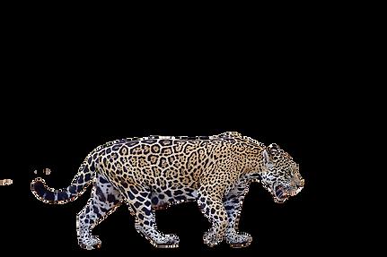 jaguarpmg.png