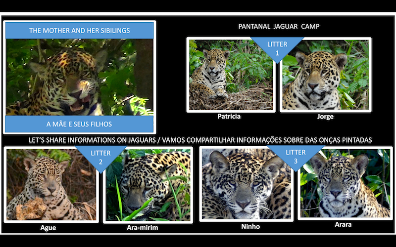 ARTE JAGUAR CAMP.png
