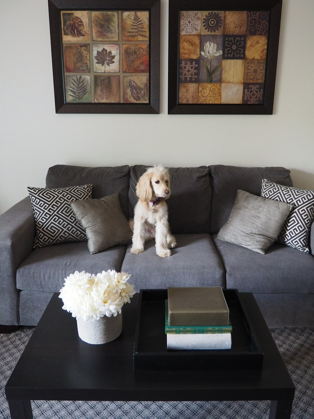 dog sitting on a sofa - home decor