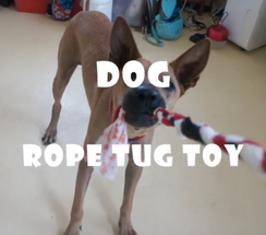 How to make dog and cat toy for Curious Event