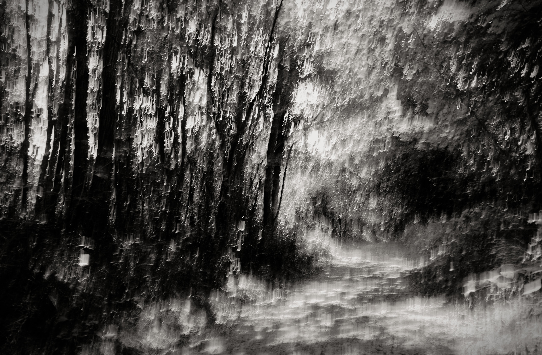 Sous-bois / série pluie de lumière