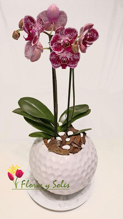 Orquídea Golf