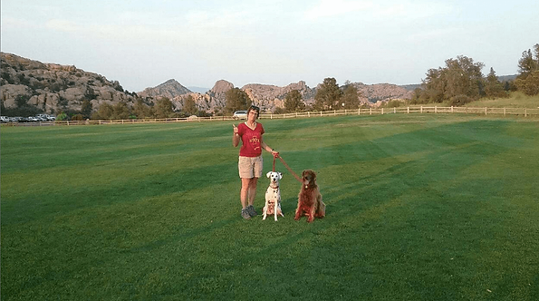 Walking with Dogs