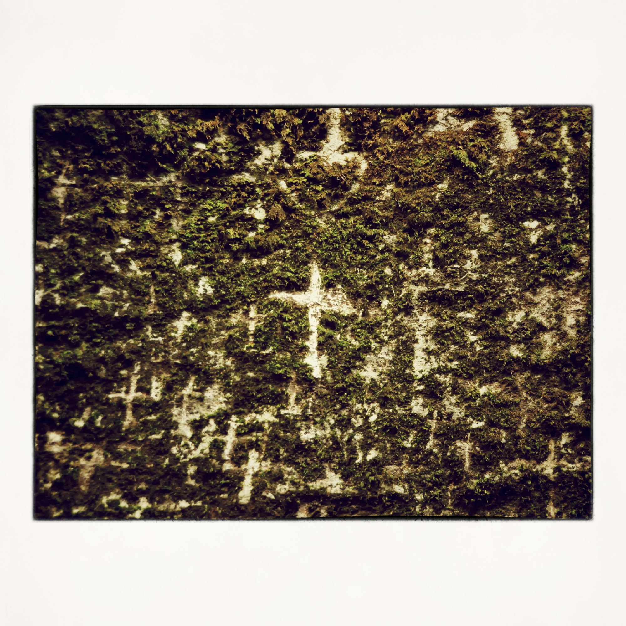 20x20 Crosses on the wall of moss