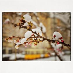 20x20 0026 Winter blooming