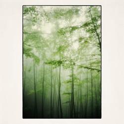 20x20 La Verna's Woods