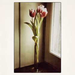 20x20 Tulips at the entrance