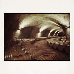 20x20 Wine cellar