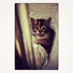 20X20 0007 Cat Pugliese