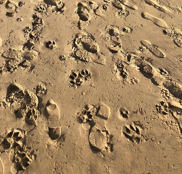 Ethical footprint.jpg