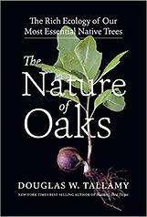 nature of oaks.jpg