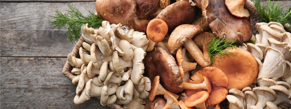 varieta-di-funghi.jpg