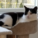 Rep. David Michel's Cat