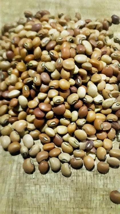 """Rabiza"" bean"