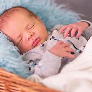 Wolfer: Newborn