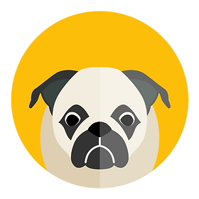 Pug puppy icon on yellow background