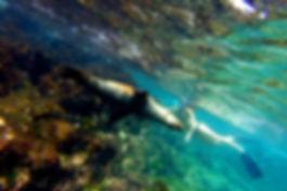 Bañarse con leones marinos