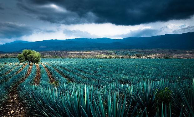 Paisaje-agavero-tequila-mexico.jpg