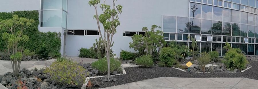Xero Jardinería, jardinería sustentable en el campus Ciudad Universitaria, México