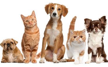 Animais de estimação no condomínio
