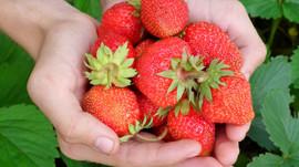 Fris en fruitig het voorjaar in
