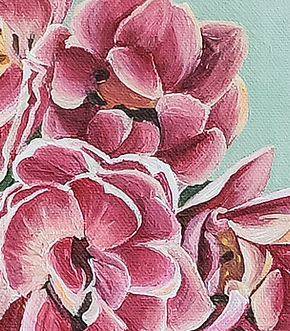 Tulip flowers detail, pink, white and green