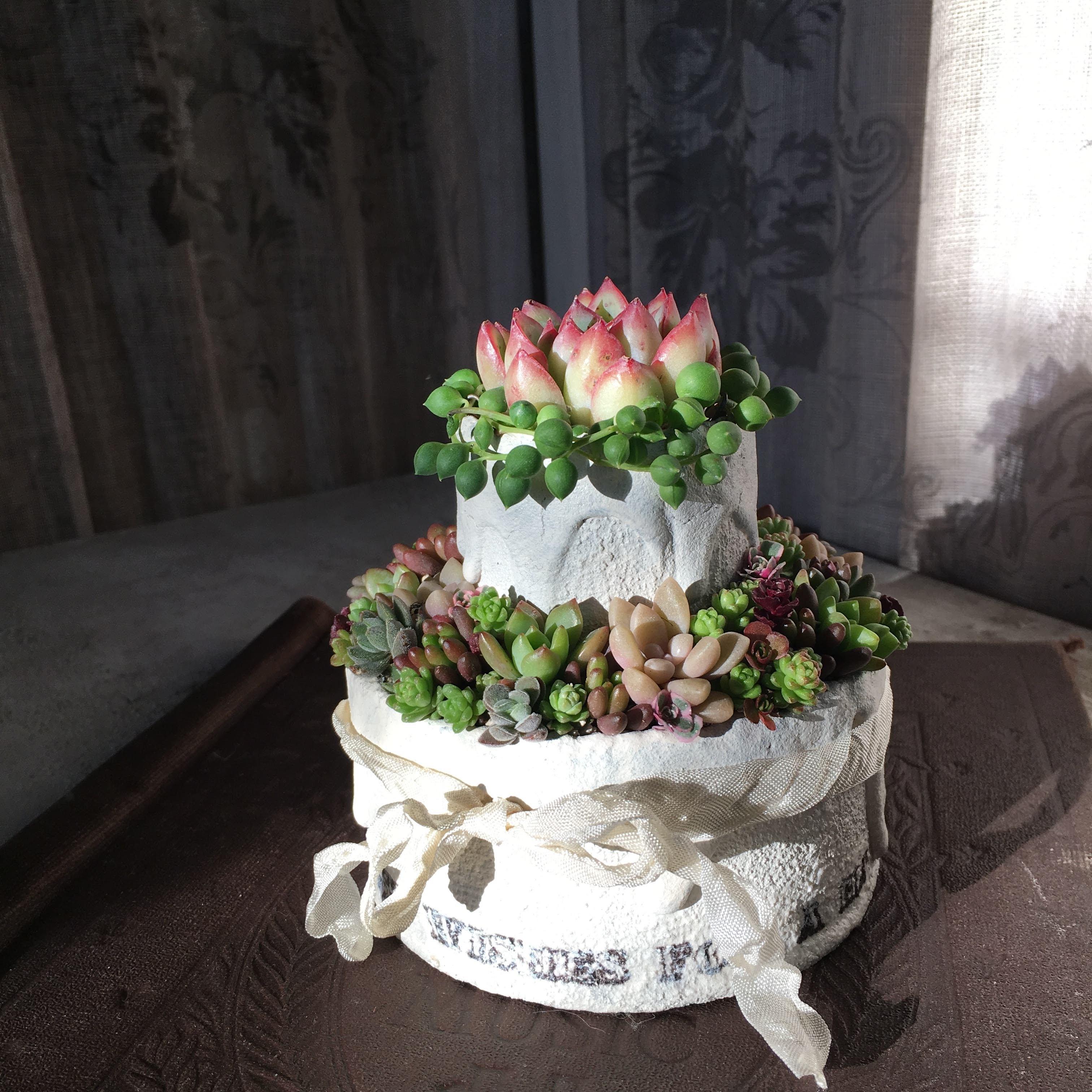 2段CAKE CAN8 M