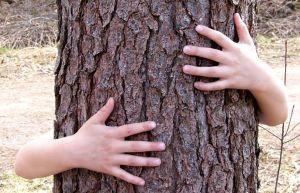 Meet a Tree: A sweet observation activity
