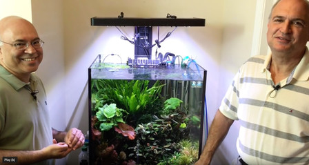 How SanJay maintains and keeps his beautiful planted tank with minmal effort