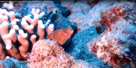 Saba and St Kitts - AmericanReef ReefKeeping video podcast - caribbean diving