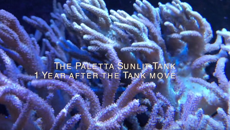 The Mike Paletta Sunlit Tank - 12 months since the tank move