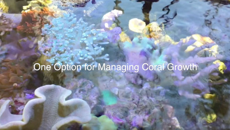 A unique way to manage coral growth - AmericanReef reefkeeping video - keeping a salt water aquarium